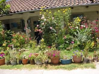 A Road-Side Garden