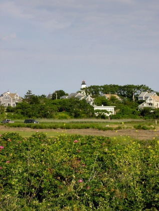 Rose Bushes in the Foreground